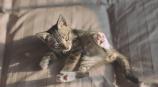 子猫の一日