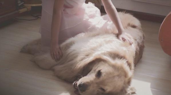 第二家人 一生守护——中国平安宠物保险微电影