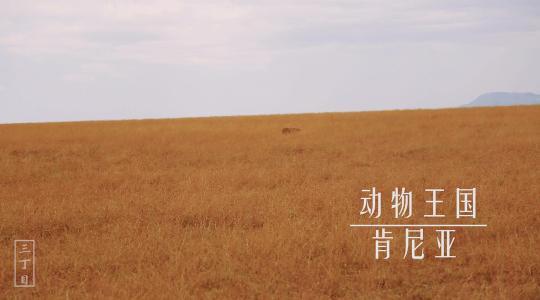 动物王国-肯尼亚