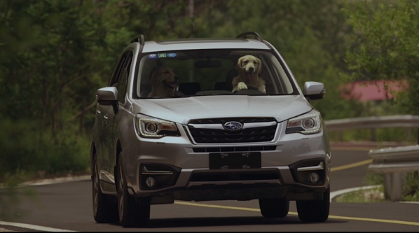 《狗狗的旅行》斯巴鲁