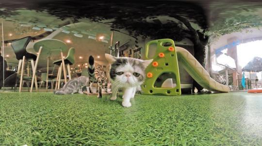 喵星球 CAT PLANET VR宣传片
