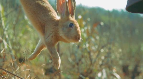 【路边野餐】对付这只兔兔,陈师傅用了野史上最深的套路