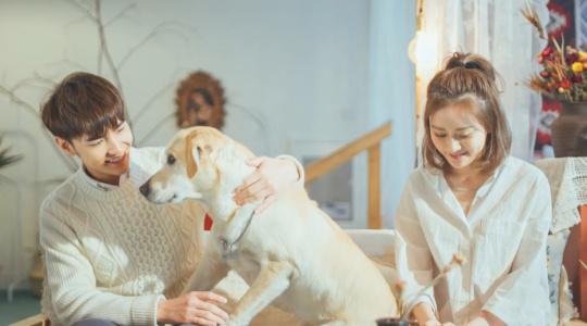 小情书 | 34 因爱情而生的宠物情缘