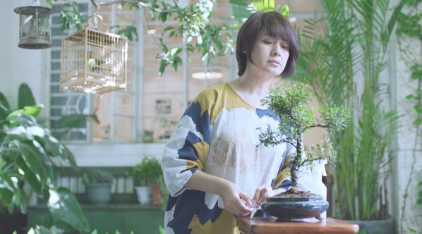 霍尼韦尔 植物链 第二季 清香木篇
