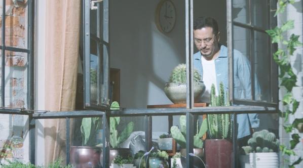 霍尼韦尔 植物链第二季 仙人掌篇