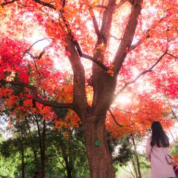 《秋夏搅拌的季节》—北京 - T.G.M VIDEO PRODUCTION