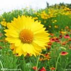 舞动的向阳花